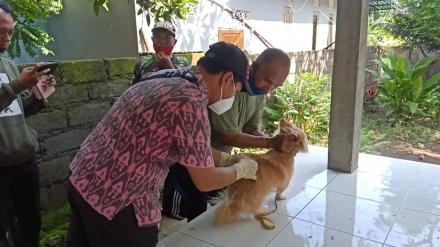 Pemerintah Desa Gerokgak bekerjasama dengan Puskewan melakukan Pemberian Vaksin Anjing di Desa Gerok